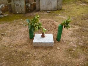 20190412仮埋葬のフタ (1).JPG